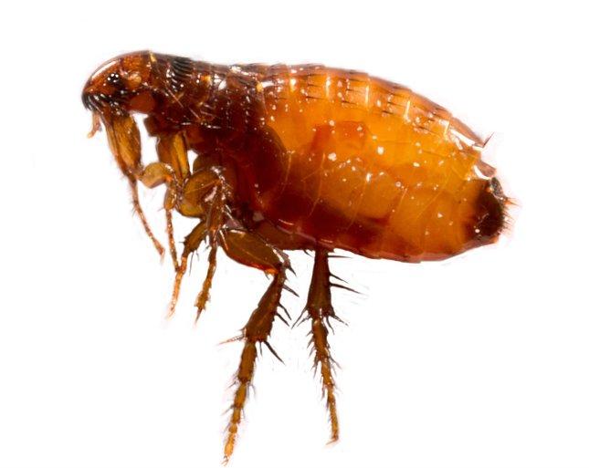 parazita biológia)