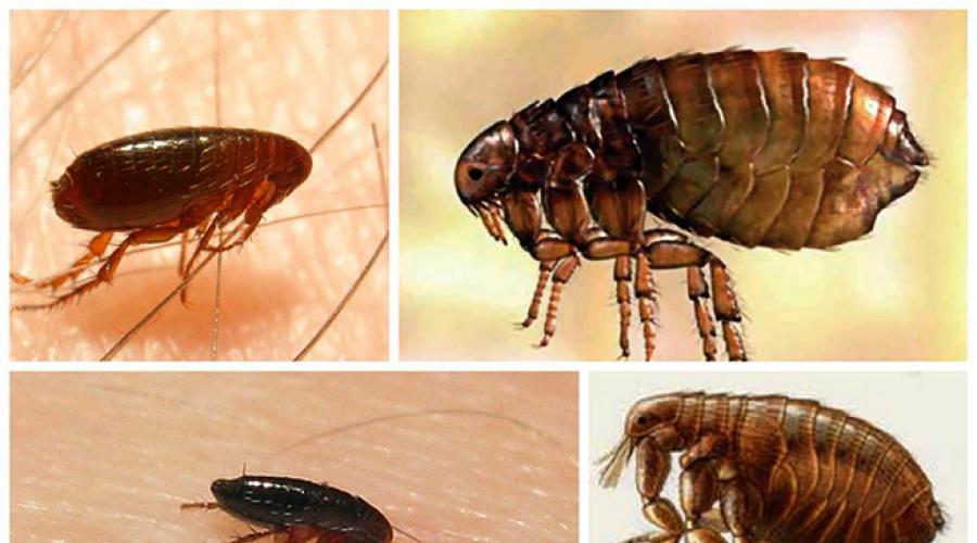 paraziták, amelyek harapnak egy embert éjjel belféreg irtas hazilag