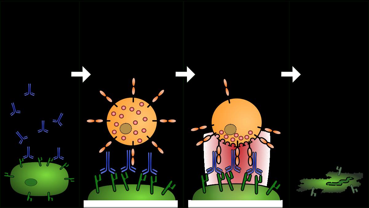a máj megtisztítása a parazitáktól gyógyszerekkel hymenolepidosis kezelésére szolgáló gyógyszerek