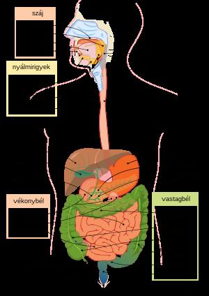 az osszes parazita kiuritese a testbol a helminták típusai és nevei