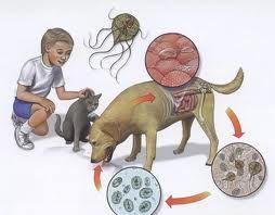 helminthiasis ápolás