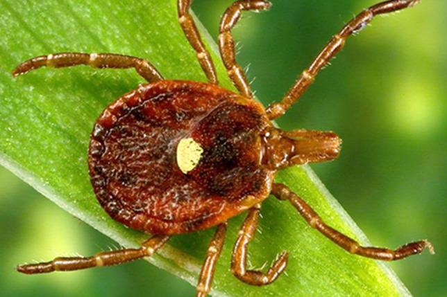 paraziták kezelése 0 bőr alatti viszkető férgek lárvái