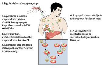 paraziták kezelése külföldön
