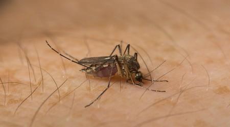 a malária plazmodium szaporodása megtörténik