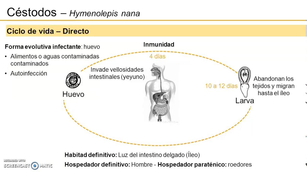 az aszcariasis bél stádiuma parazita körmök kezelése