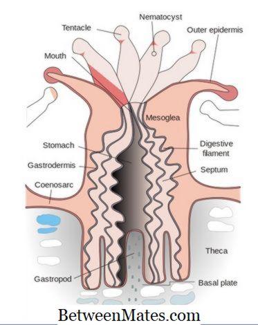Platyhelminthes úszás férgek felnőttkori tünetei és kezelése
