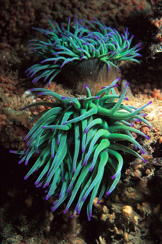 Milyen ellenség a férgektől. Parazita fertőzés – a rejtőzködő ellenség - Mandala egészségkuckó