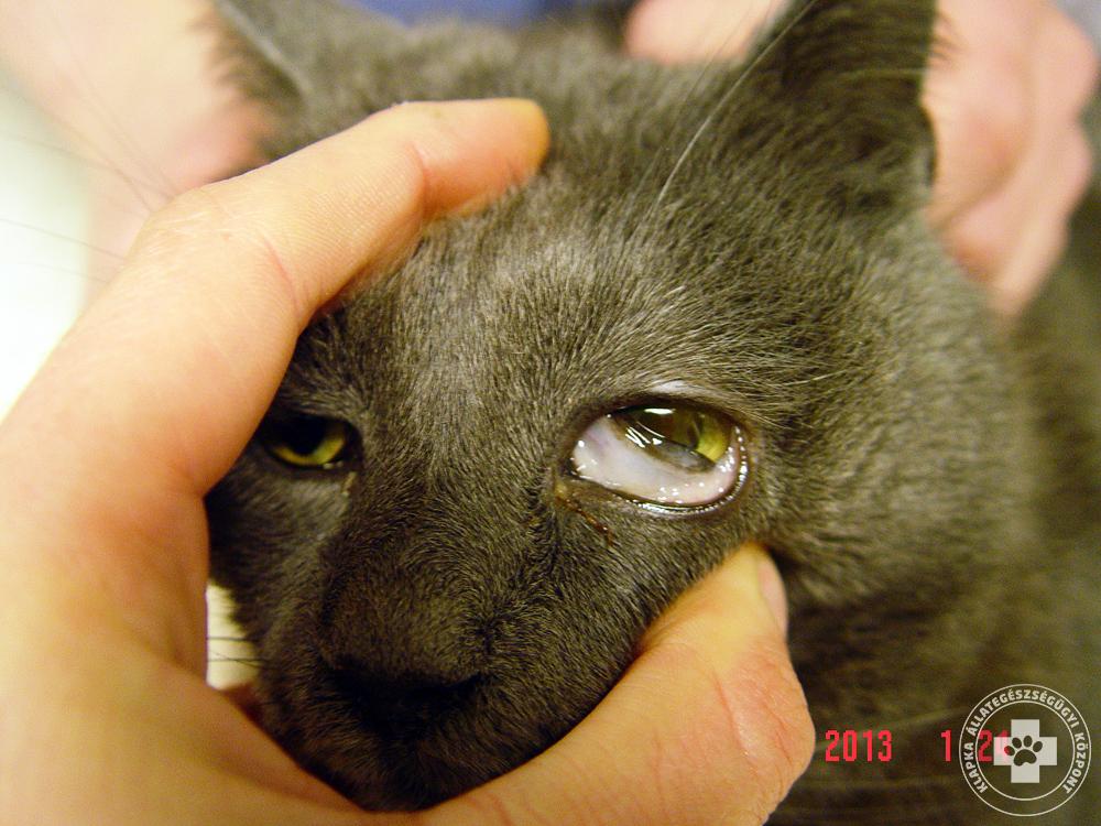 macska bélférgesség tünetei férgek megelőzésére szolgáló férgek