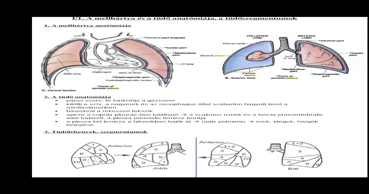 agy ascariasis, mint kezelni férgek paraziták a belekben