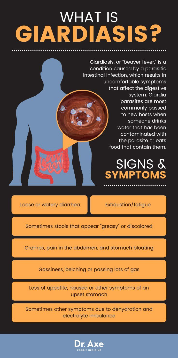 Giardia brain fog. A patogén és a védő baktériumok szerepe