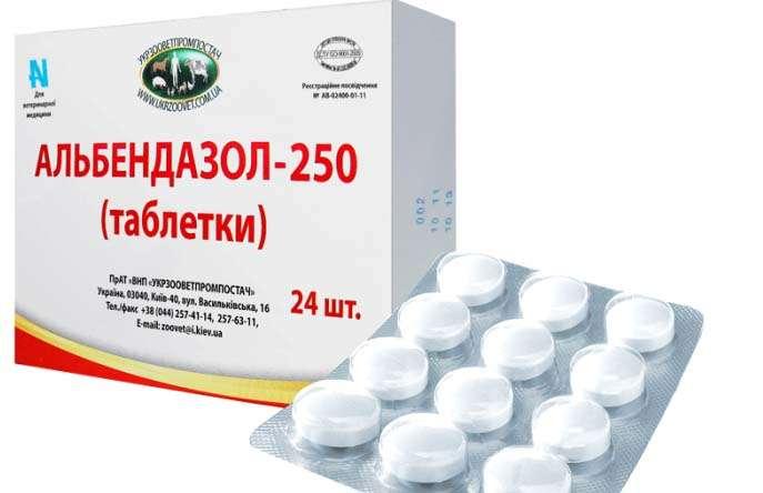hpv impfung gardasil 9