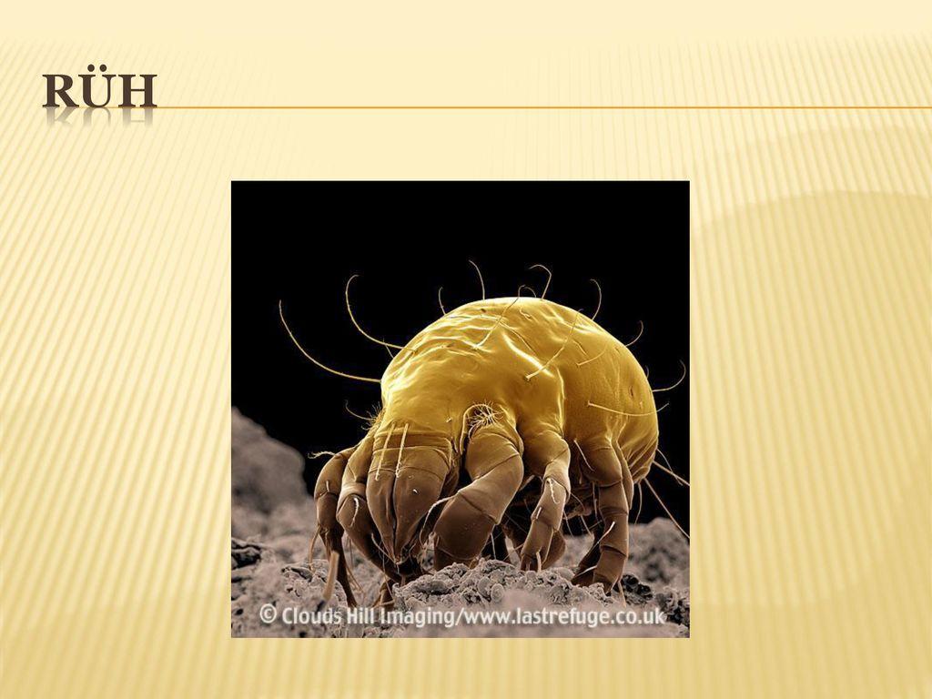 lehet a pinworms viszketés nélkül