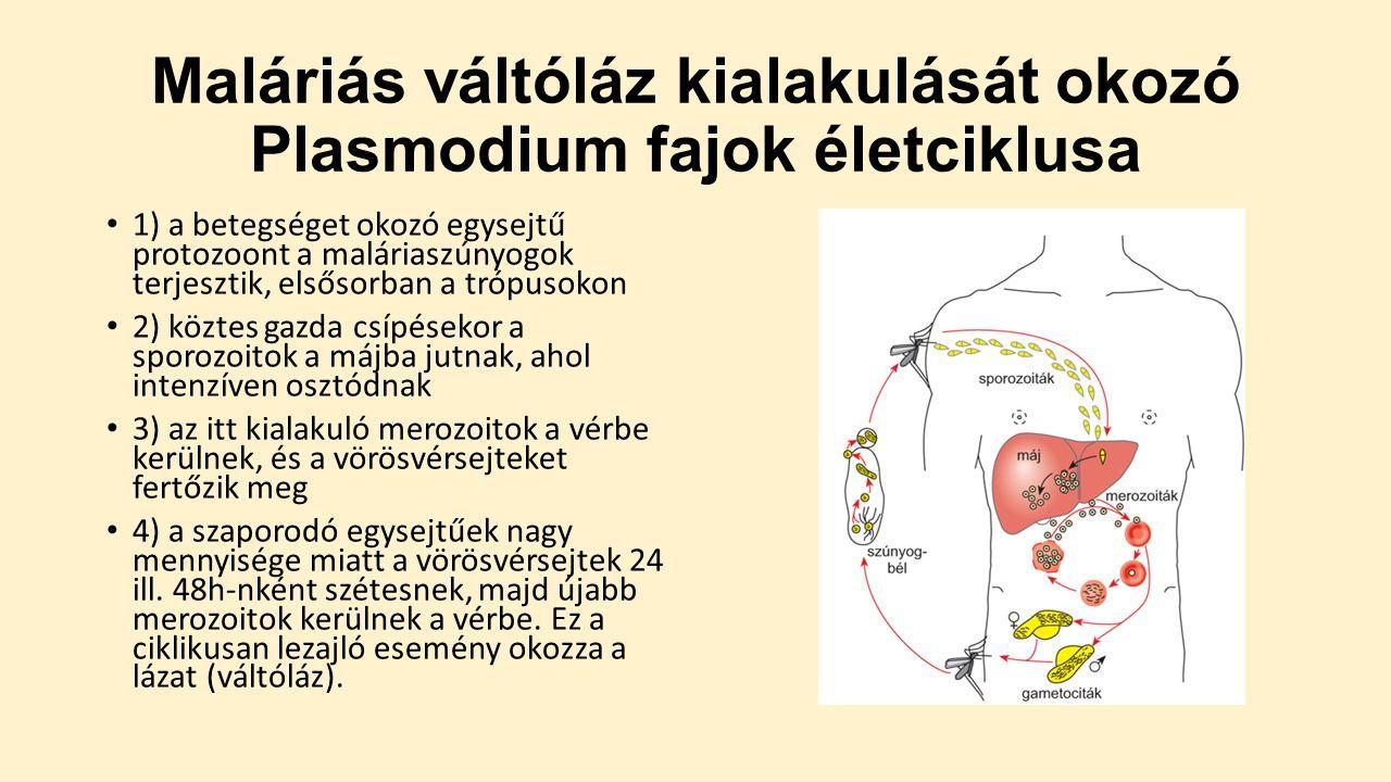 protozoan paraziták az emberben Giardiasis gyermekekre vonatkozó ajánlások