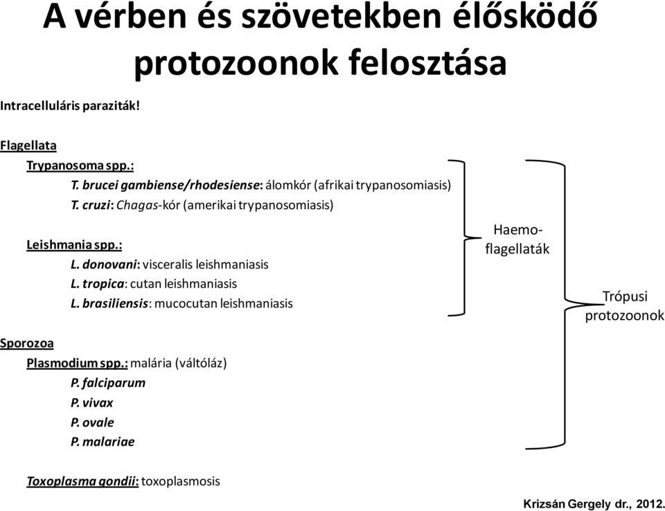 közbenső gazdaszervezet a Plasmodium malária életciklusában strongyloidosis pete