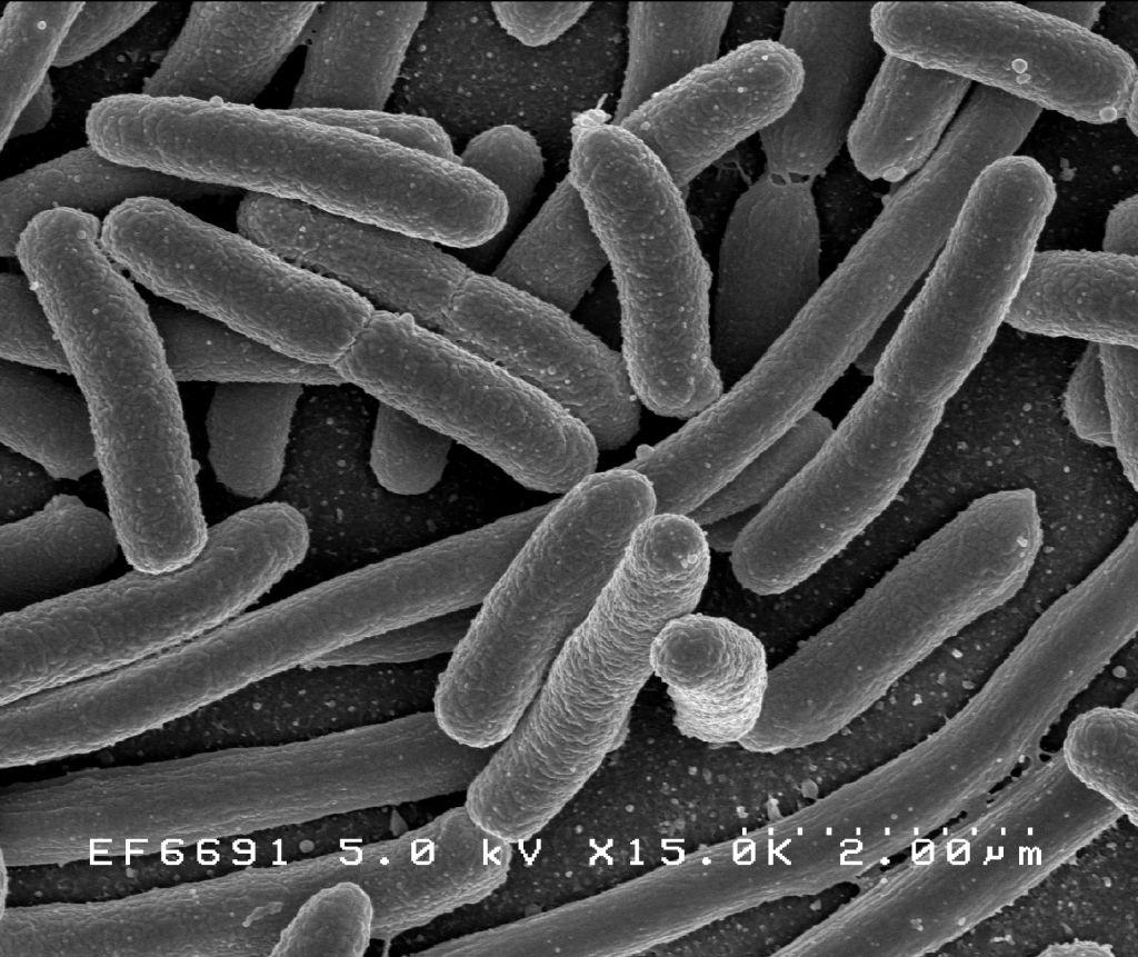 a szervezet parazitáinak gyógyszereinek felsorolása