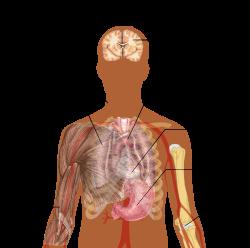 az emberi test parazitáinak gyógyítása jobb krónikus enterobiosis