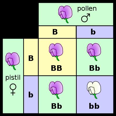 Helmint szaporodási és fejlődési táblázat recept a paraziták szódatisztítására