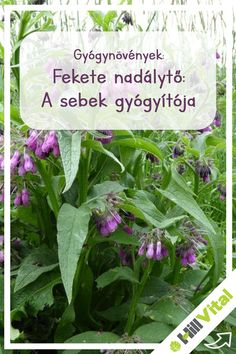 Kaukázusi gyógynövények parazitaellenes gyűjtemény gyógyszer az emberi test bél parazitáira