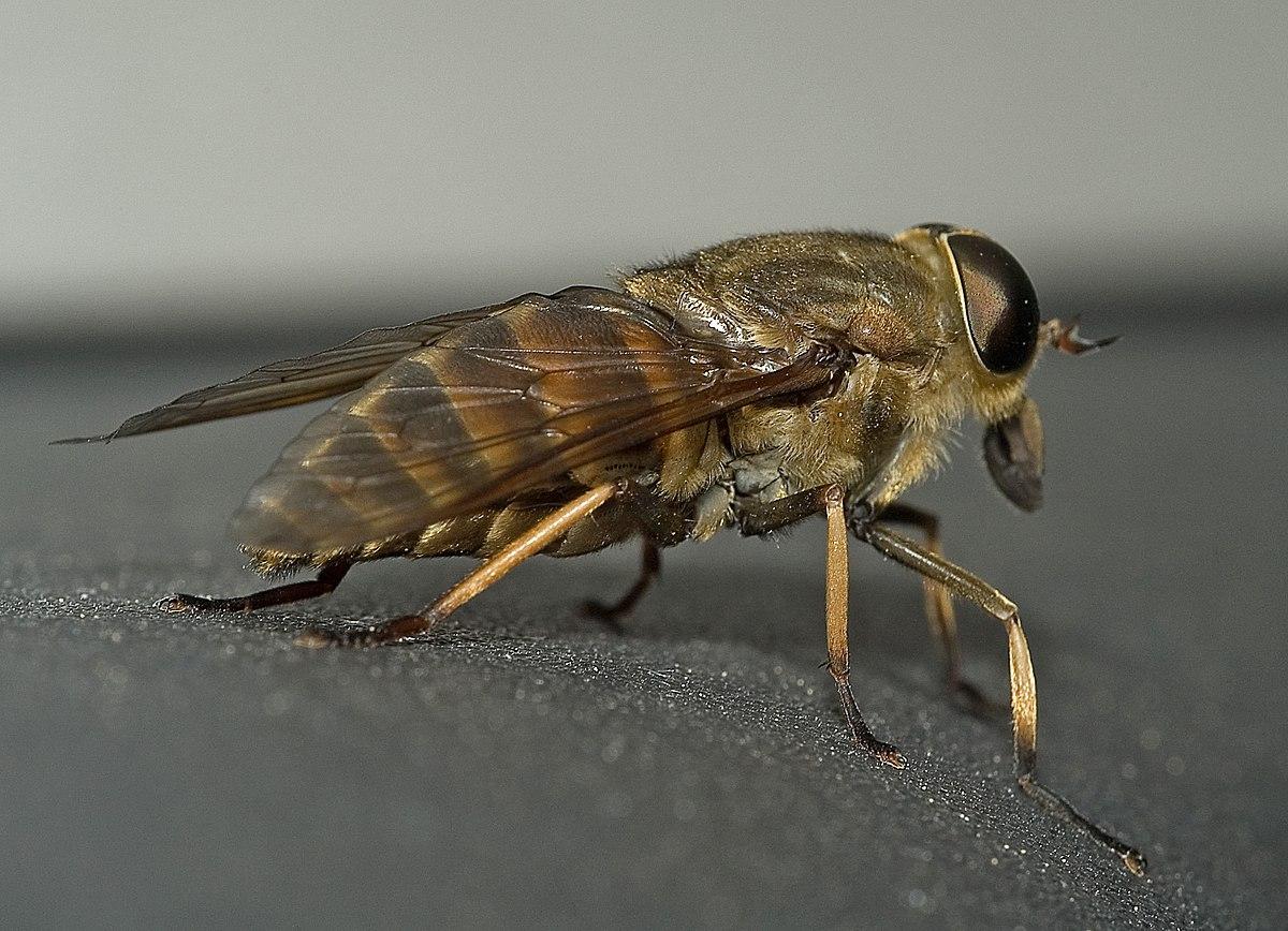 nyers élelmezésbeli tisztítás a parazitáktól gyógyszer férgek és paraziták számára
