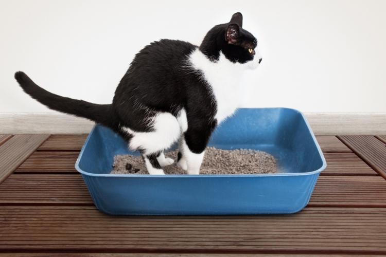 macska bélférgesség tünetei a férgek viszketnek