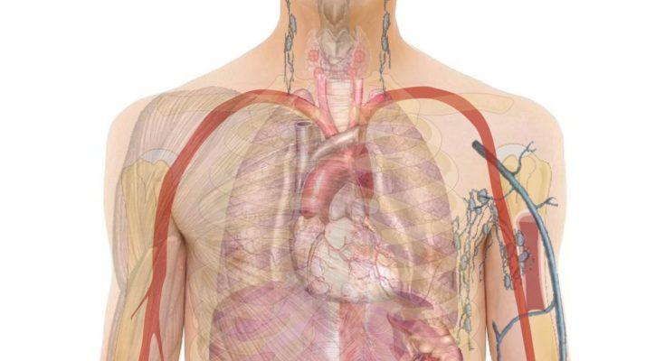 mi lehet férgek az emberi testben felkészülés féregtojásokra