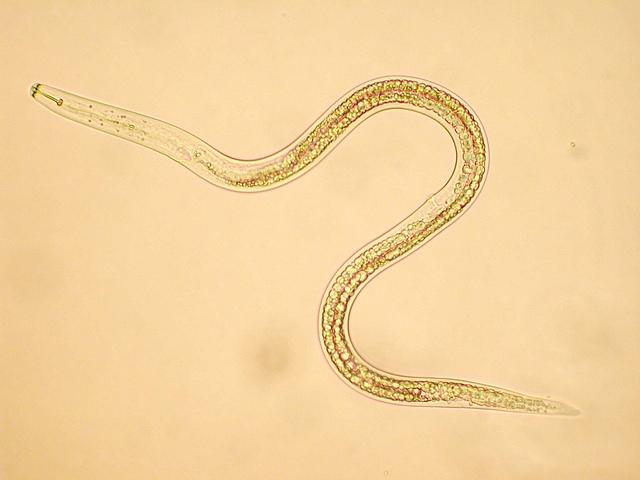 A külső paraziták jelentése. Külső paraziták jelentése - Tartalomjegyzék