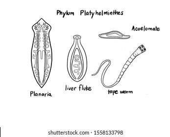 parazitaellenes elixír értékelések