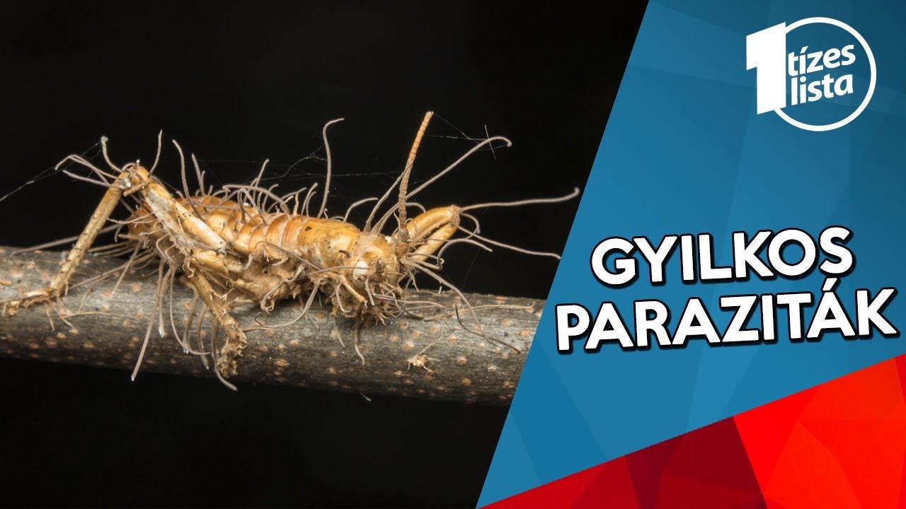 sokan paraziták