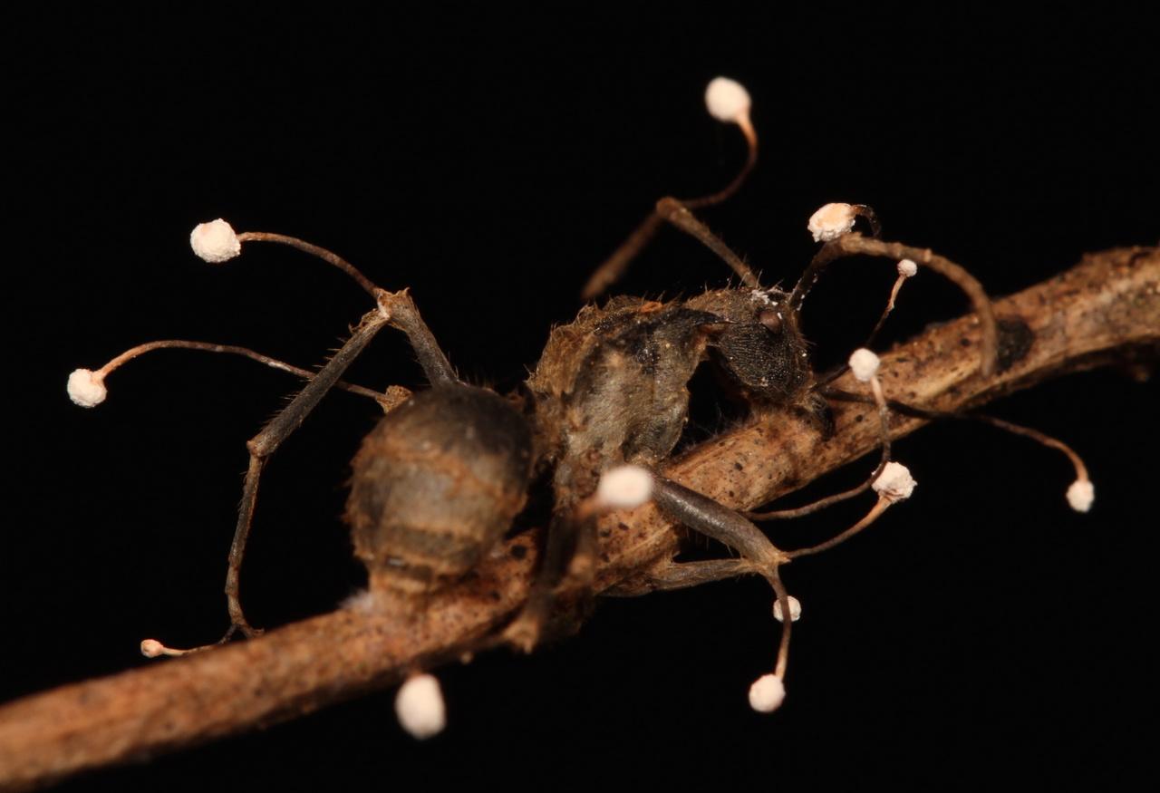 Belső paraziták és gombák kezelése, Paraziták és belső gombák kezelése