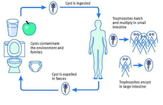 giardia symptoms uk skarlát parazita kezelés