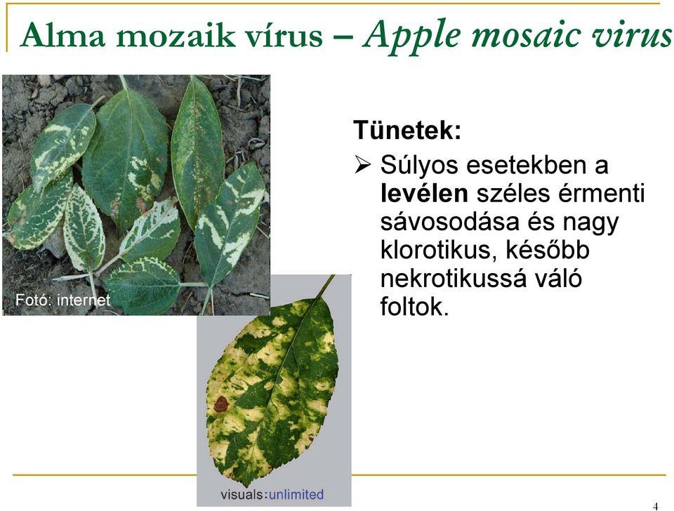 parazita a körte levelein)
