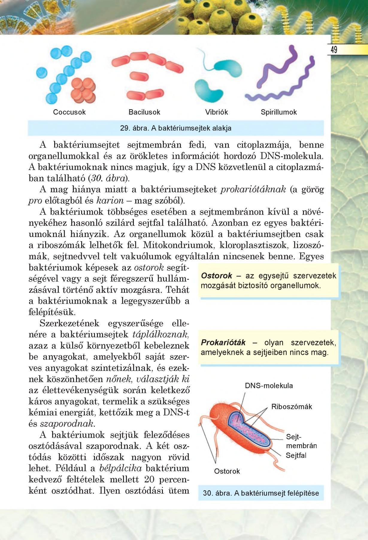 kerek féreg típusú heterotróf táplálkozás)