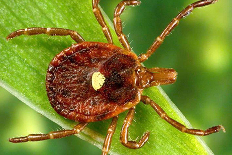 schmid hempel paraziták a társadalmi rovarokban