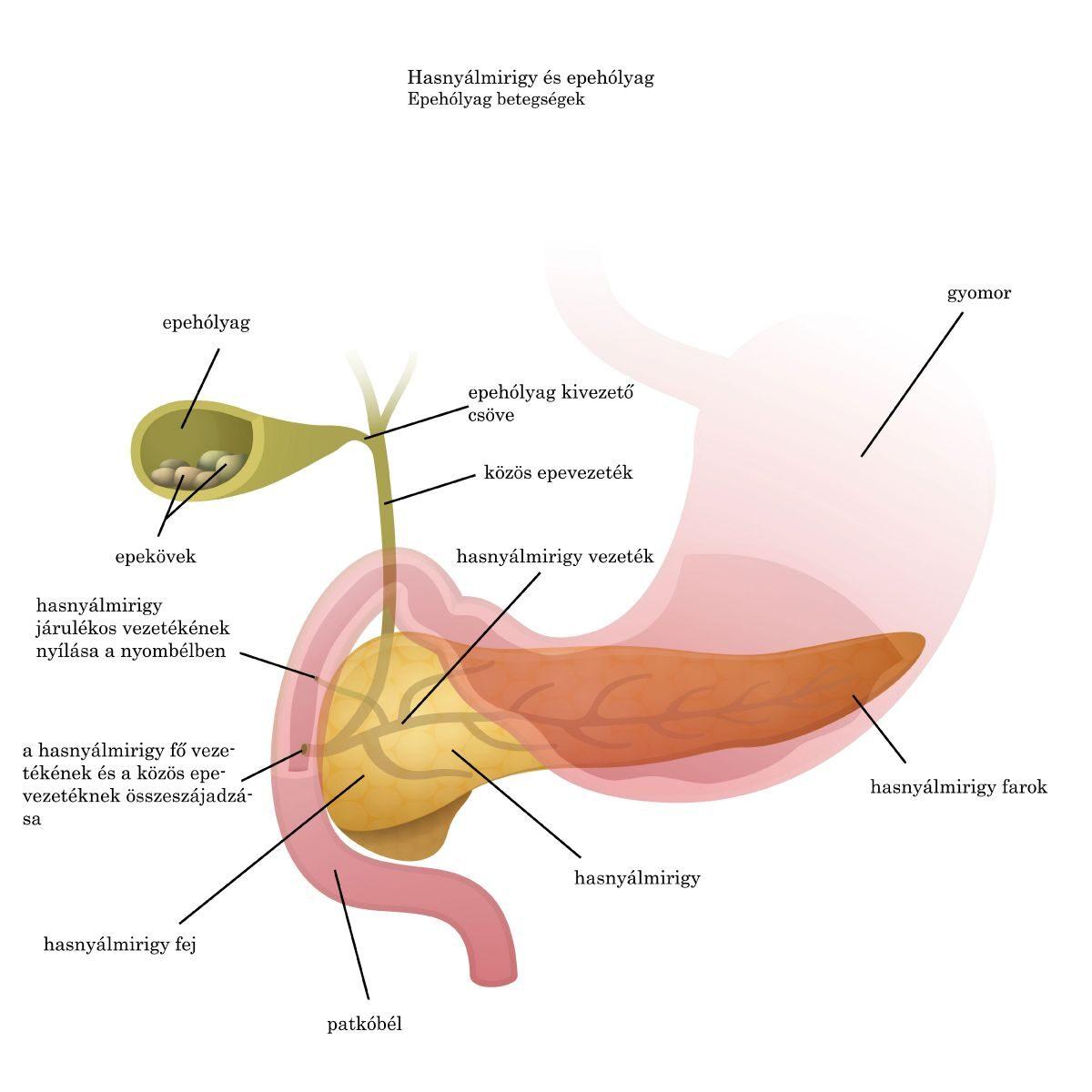 ahol a szervek a fő parazita