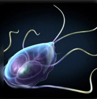 az emberi test parazitáinak hatékony kezelése