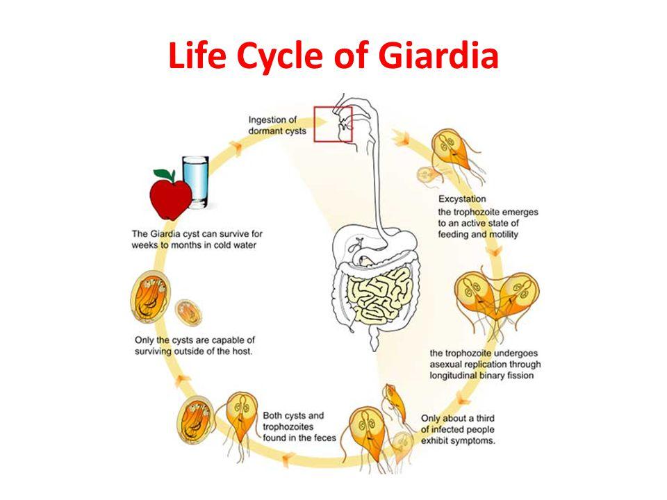 Giardia mensen behandeling