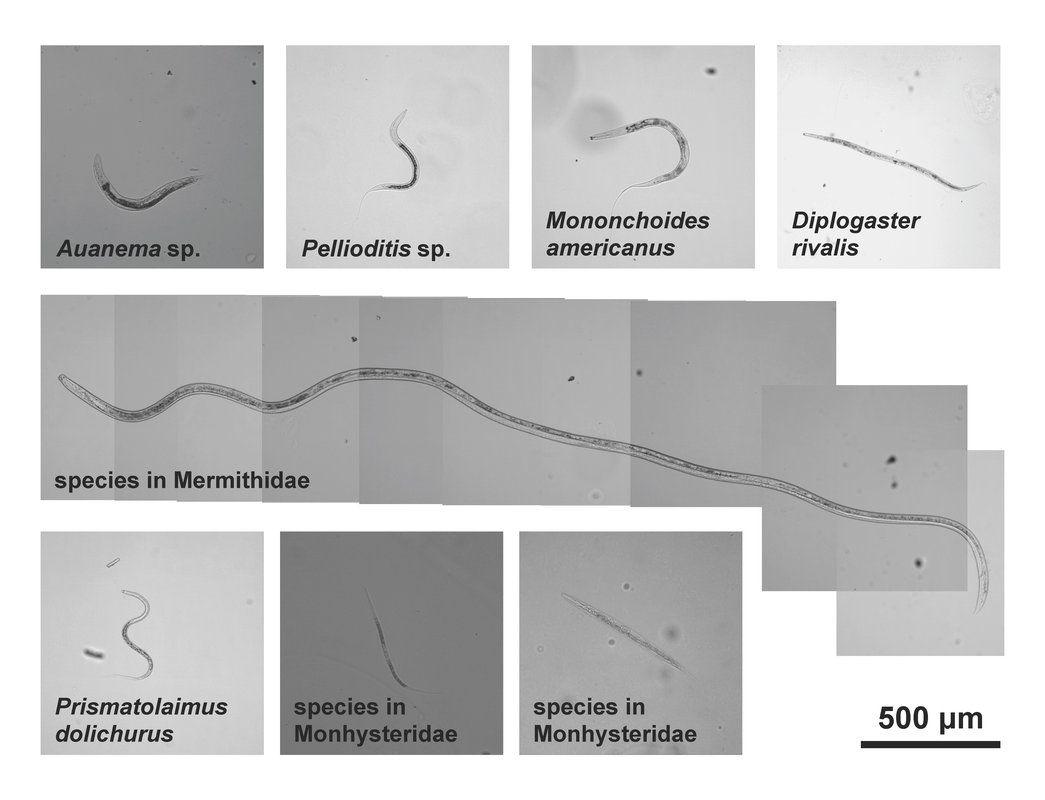 12 biztos jele annak, hogy parazita van a testedben, Parazitáfertozes tünetei