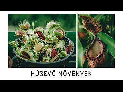 gyógynövény kiürítő paraziták)