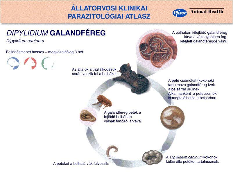 méregtelenítés nyers élelmezőkben Giardiasis a gyermekek kezelésében és tünetei