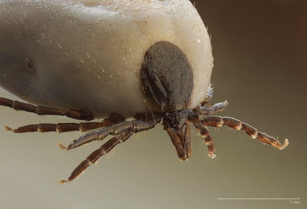 új eszközök a paraziták elpusztításához tisztitsa meg a belek a parazitaktol