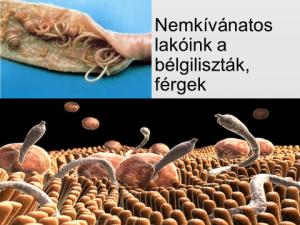 különböző féreg paraziták