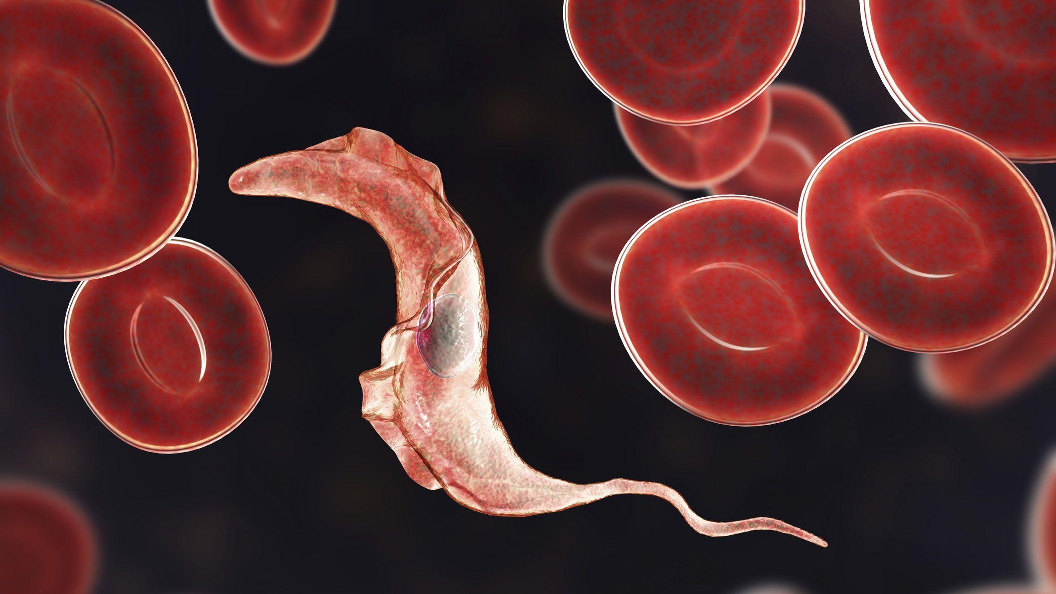 vörös paraziták