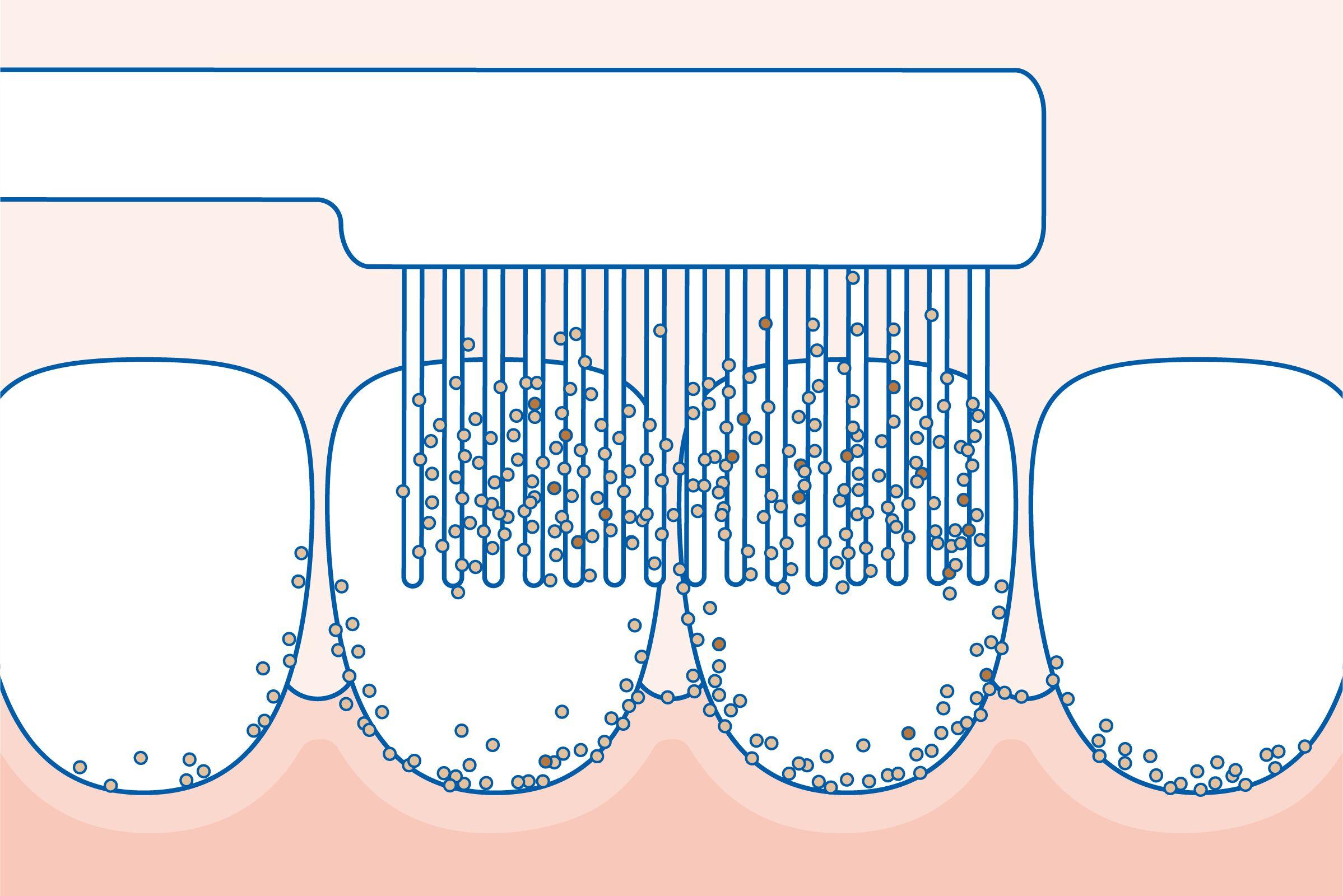 lehetséges e pinwormokat tenyészteni gyógyászat férgek kezelésére