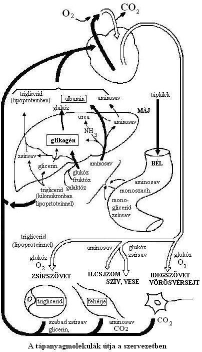 gyomor-bél traktus szaga a szájból hogyan lehet megszabadulni a rothadt lélegzettől
