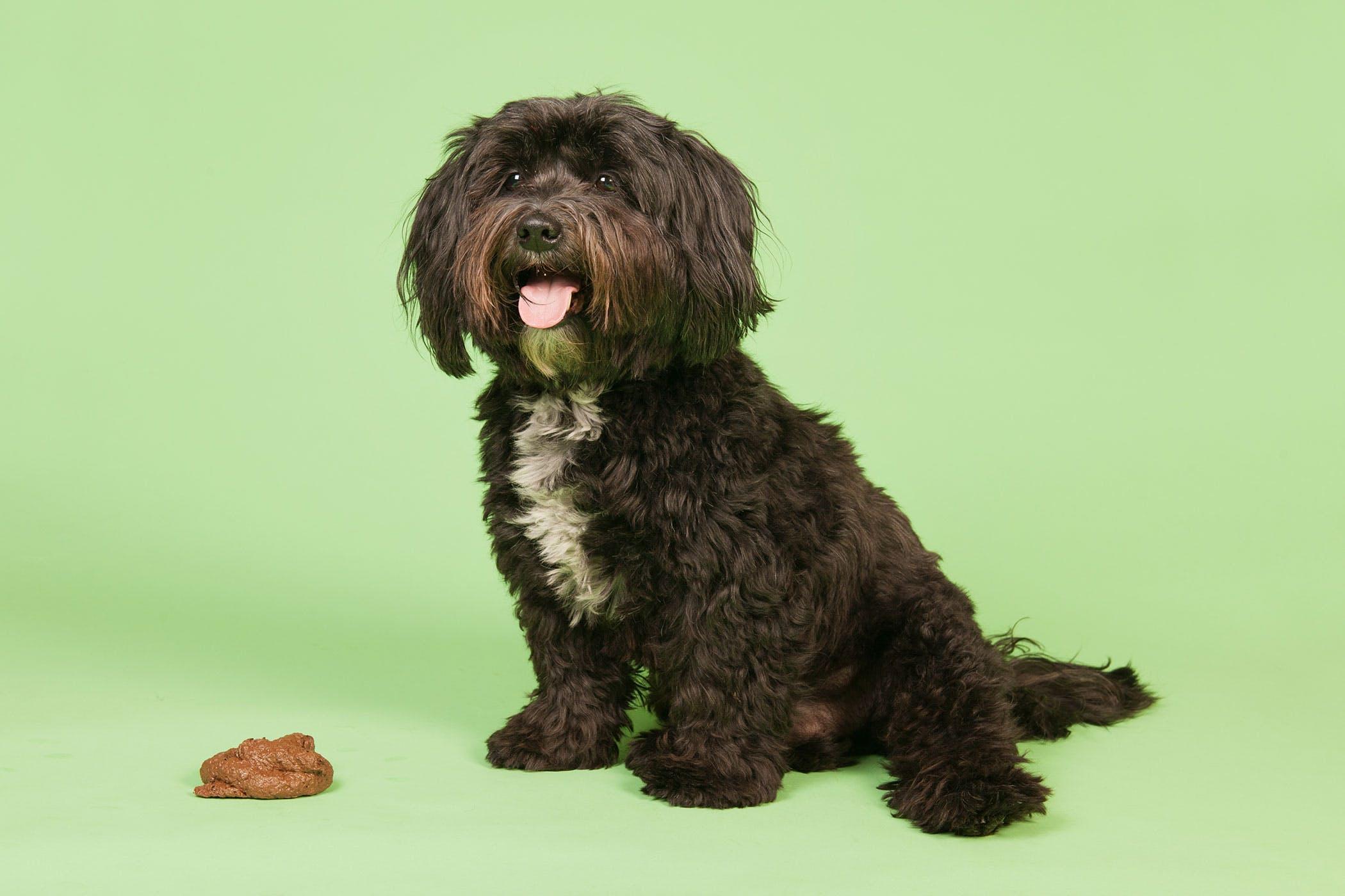 giardia ziekte honden milyen termékek forrásai az aszcariasisnak