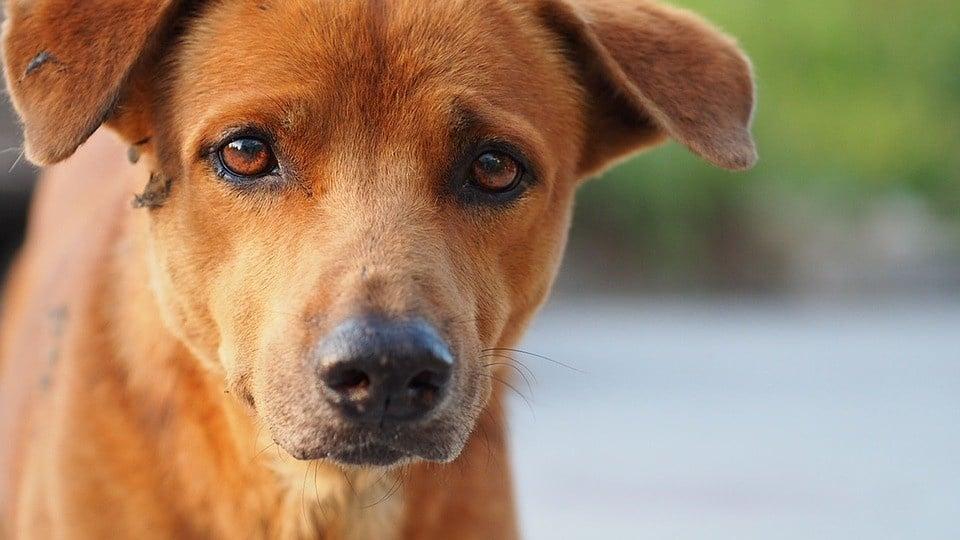 giardia hond vanzelf over