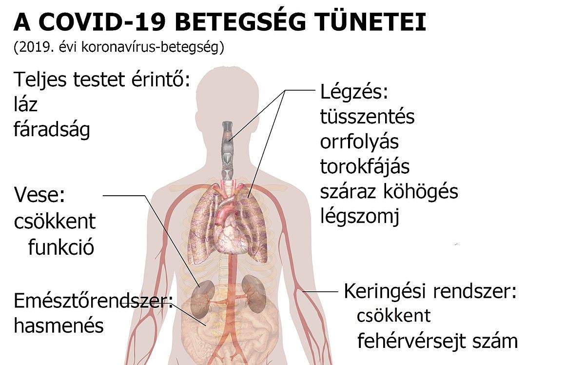 férgek trichinosisának kezelése