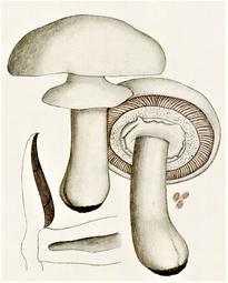 les champignons paraziták gyógyszer az emberi test parazitáira nnn