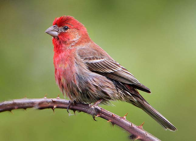 A madarak emberi parazitái