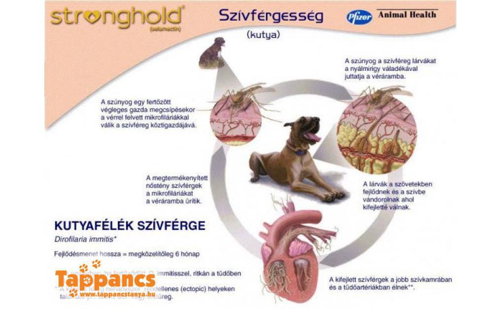 szívférgesség megelőzése pinworm az enterobiasis kórokozója